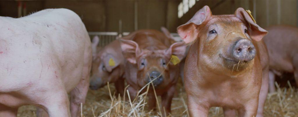 allevamenti benessere animale